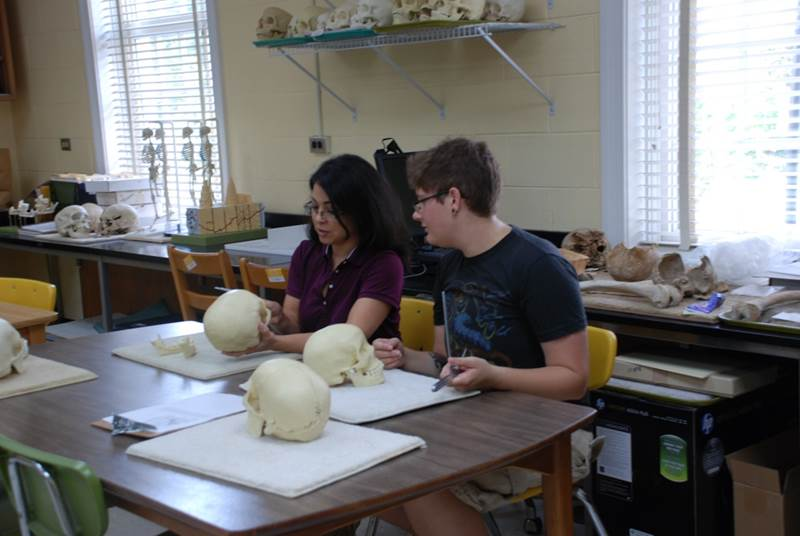 Midori Albert and Oliver Smith working in the Osteology Lab at UNCW