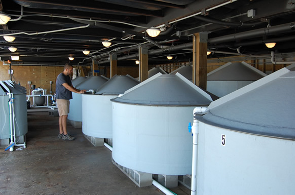 Pilot commercial scale nursery tanks. Pat Carroll faces a 2,100-L unit.