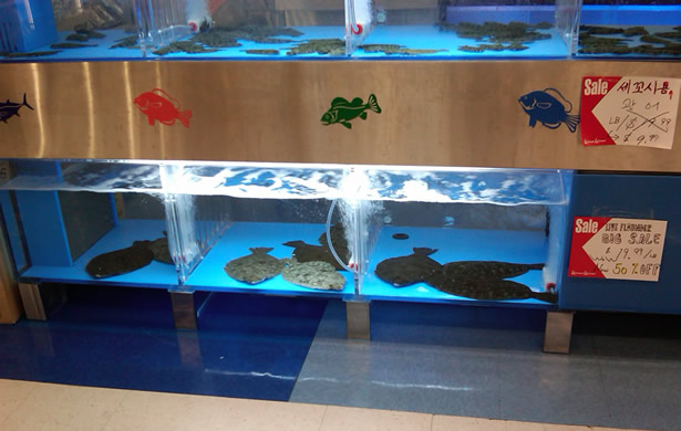 S Mart displays live UNCW southern flounder produced by Blue Ocean Farms and UNCW.