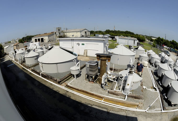Recirculating broodstock holding systems at the Aquaculture Facility at Wrightsville Beach.