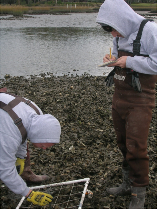Sampling oyster metrics in the winter