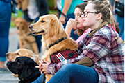 Service dogs and people sit on the sidelines during the paws4people reunion.