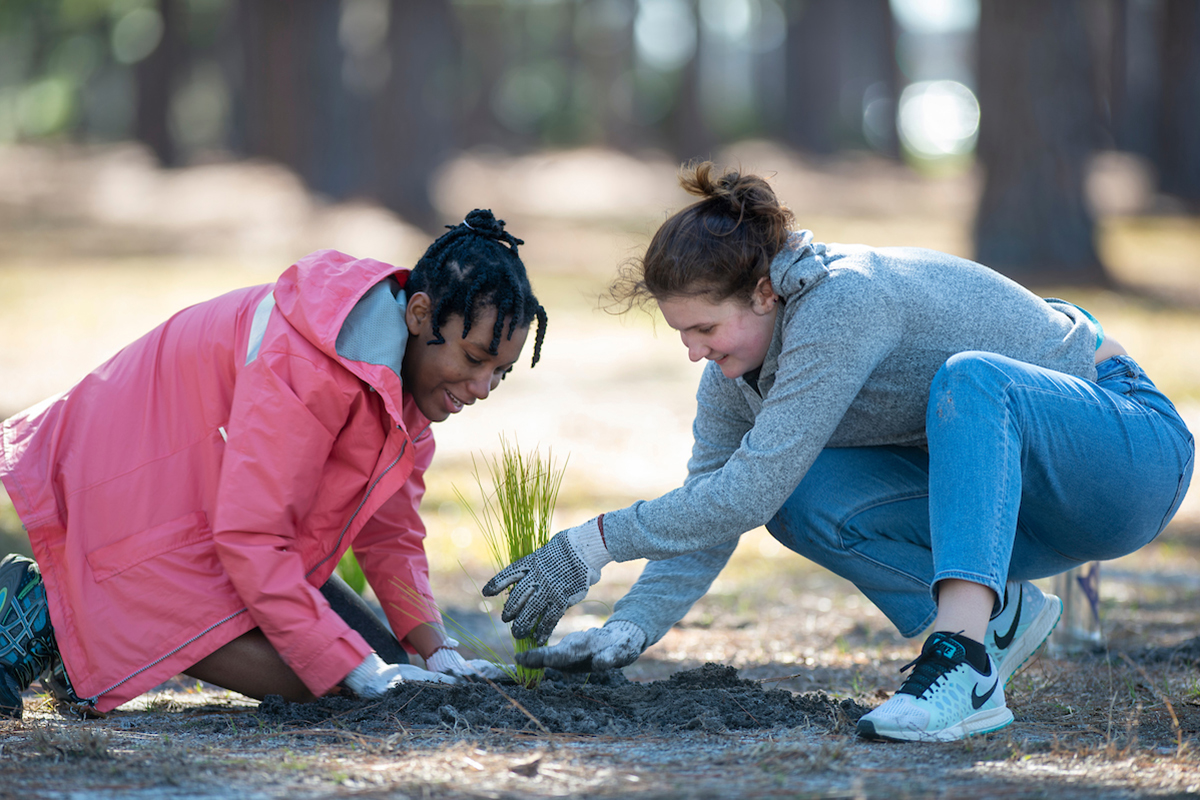 Two women wearing gardening cloves crouch down to pat down dirt around a long leaf pine seedling.