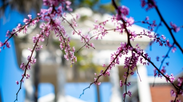 branch with blossoms with columns in background