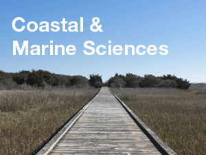 Coastal & Marine Sciences image of pier over marsh