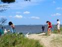 Honors Scholars College Beach Sweep