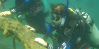 Sea GEMS diver experiencing an underwater exploration