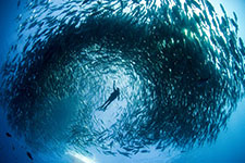 schooling with the fishes