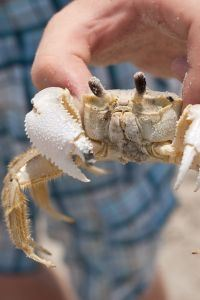marine biology camp scholarship information ghost crab