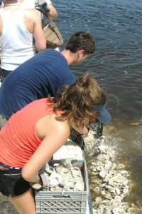 student working on oyster reef