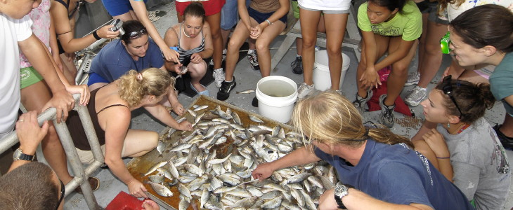 students sorting a fish trawl