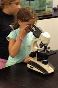 MarineQuest Summer Camp girls looking at microscope