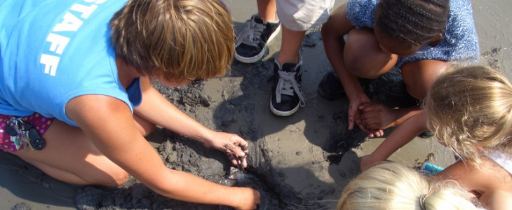 students on beach looking in mud for animals