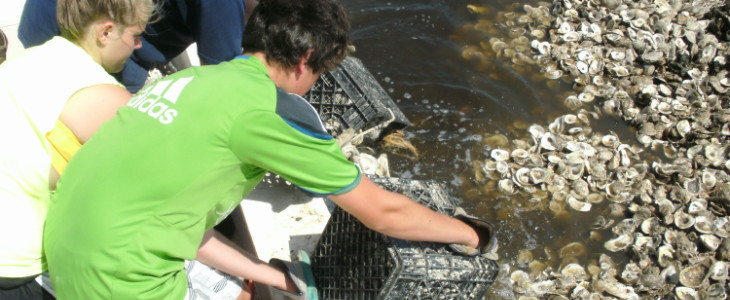 students building oyster reef