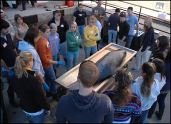 UNCW students investigating stranding.